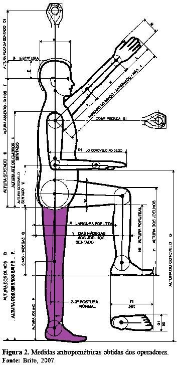 imagem: medidas antropométricas